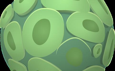 Algen chlorella